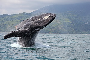 Paradise Breezes - WHALE WATCHING