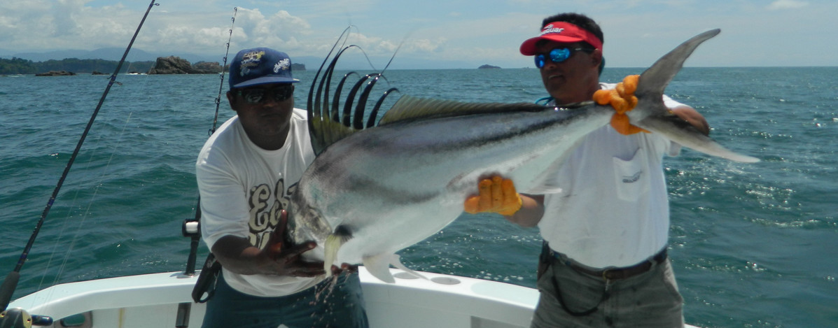 Paradise management costa rica sportfishing for Rooster fish pictures